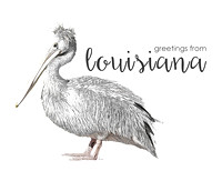 Louisiana Pelican Greetings Notecards